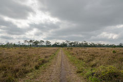 Paisaje seco de la sabana en día nublado fotografía de archivo