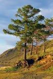 Paisaje siberiano Imagen tomada cerca del lago Baikal Foto de archivo libre de regalías
