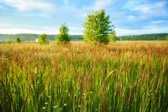 Paisaje simple del verano con el prado y los árboles jovenes fotos de archivo