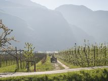 Paisaje sobre manzana y las uvas del valle del trentino imagen de archivo libre de regalías