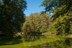 Paisaje soleado con el lago en un bosque Foto de archivo libre de regalías