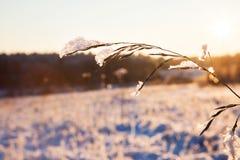 Paisaje soleado de la naturaleza del invierno Fotografía de archivo libre de regalías