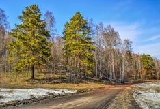Paisaje soleado de la primavera temprana con el camino en el bosque Fotos de archivo