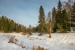 Paisaje soleado del invierno Imágenes de archivo libres de regalías