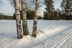 Paisaje soleado del invierno foto de archivo libre de regalías