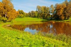Paisaje soleado del otoño Árboles del otoño del bosque en el banco del pequeño río del bosque Imagen de archivo libre de regalías