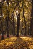 Paisaje soleado del otoño Imágenes de archivo libres de regalías