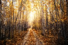 Paisaje soleado del otoño con un camino forestal Foto de archivo libre de regalías