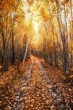 Paisaje soleado del otoño con un camino forestal Imagen de archivo