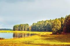 Paisaje soleado del otoño de los árboles forestales del río de Soroti y del otoño en Pushkinskiye sangriento, Rusia Fotografía de archivo