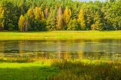Paisaje soleado del otoño de los árboles forestales del río de Soroti y del otoño en Pushkinskiye sangriento, Rusia Imágenes de archivo libres de regalías