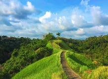 Paisaje soleado del paraíso con el campo del arroz y el fondo natural azul y verde del bosque salvaje de la foto Imágenes de archivo libres de regalías