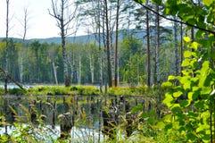Paisaje soleado del verano en la isla de StFaith en Urales meridionales, Rusia Fotografía de archivo libre de regalías