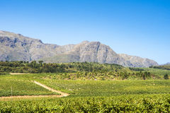 Paisaje Stellenbosch Fotografía de archivo