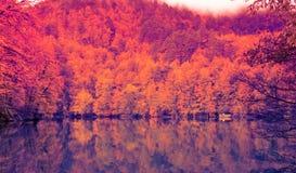 Paisaje suave del otoño de la visión, parque otoñal, naturaleza de la caída Fotografía de archivo libre de regalías