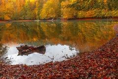 Paisaje suave del otoño de la visión, parque otoñal, naturaleza de la caída Imagen de archivo