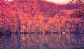 Paisaje suave del otoño de la visión, parque otoñal, naturaleza de la caída Fotografía de archivo