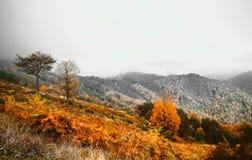 Paisaje suave del otoño de la visión, parque otoñal, naturaleza de la caída foto de archivo