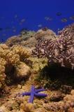 Paisaje subacuático con las estrellas de mar Imagenes de archivo