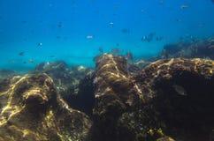 Paisaje subacuático con las rocas imagen de archivo libre de regalías
