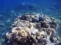 Paisaje subacuático de la costa tropical Arrecife de coral en agua de mar azul Imagenes de archivo