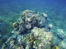 Paisaje subacuático de la costa tropical Arrecife de coral en el mar caliente Fotos de archivo libres de regalías