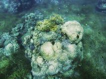 Paisaje subacuático de la costa tropical Forma redonda del arrecife de coral Foto de archivo libre de regalías