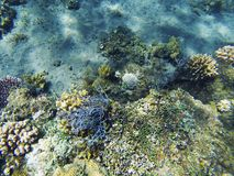 Paisaje subacuático de la costa tropical Formas diversas del arrecife de coral Fotos de archivo