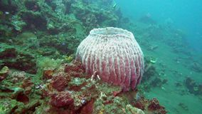 Paisaje subacuático del mar, de los pescados y de los corales tropicales de diverso color almacen de metraje de vídeo