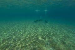 Paisaje subacuático y buceadores en el Mar Rojo Imágenes de archivo libres de regalías