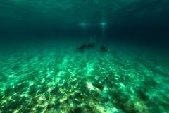 Paisaje subacuático y buceadores en el Mar Rojo Foto de archivo