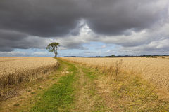 Paisaje tempestuoso de las tierras de labrantío Foto de archivo libre de regalías
