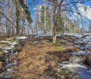 Paisaje temprano de la primavera en bosque con nieve y arroyos de fusión Foto de archivo libre de regalías