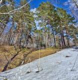 Paisaje temprano de la primavera en bosque con nieve y arroyos de fusión Foto de archivo