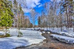 Paisaje temprano de la primavera en bosque con nieve y el arroyo de fusión Imagen de archivo libre de regalías