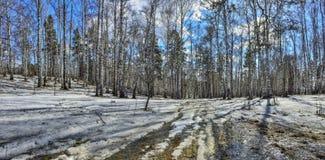 Paisaje temprano de la primavera en bosque con nieve y el arroyo de fusión Imagenes de archivo
