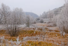 Paisaje temprano del invierno con las plantas y los árboles helados en colinas Imágenes de archivo libres de regalías
