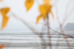 Paisaje tranquilo con las hojas del lago y del amarillo Foto de archivo libre de regalías