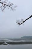 Paisaje tranquilo con las ramas del lago y de árbol Fotos de archivo