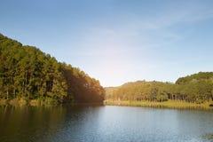 Paisaje tranquilo del bosque de la orilla del lago Imagen de archivo libre de regalías