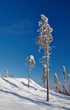 Paisaje tranquilo del invierno con los árboles hermosos en la cuesta de la colina Foto de archivo libre de regalías