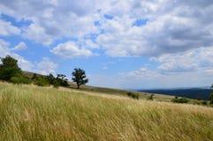 Paisaje tranquilo del verano Foto de archivo libre de regalías
