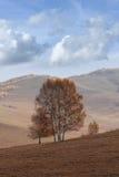 Paisaje tranquilo en una estepa en colores del otoño, Mulan Weichang, Inner Mongolia, China Imagenes de archivo