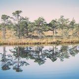 Paisaje tranquilo hermoso del lago brumoso del pantano fotografía de archivo libre de regalías