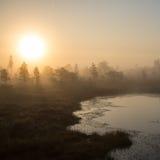 Paisaje tranquilo hermoso del lago brumoso del pantano imágenes de archivo libres de regalías