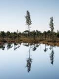 Paisaje tranquilo hermoso del lago soleado del pantano fotografía de archivo libre de regalías