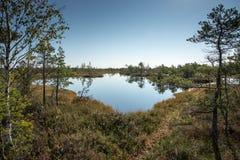 Paisaje tranquilo hermoso del lago soleado del pantano Fotos de archivo libres de regalías