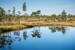 Paisaje tranquilo hermoso del lago soleado del pantano Imagenes de archivo