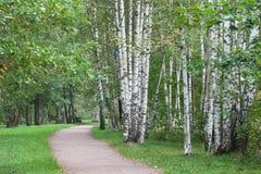 Paisaje trayectoria del abedul en parque del otoño Imagen de archivo libre de regalías