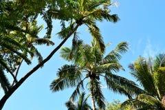 Paisaje tropical fotos de archivo